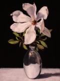 2.-White-Magnolia-40x30cm.-oil-on-copper-2020
